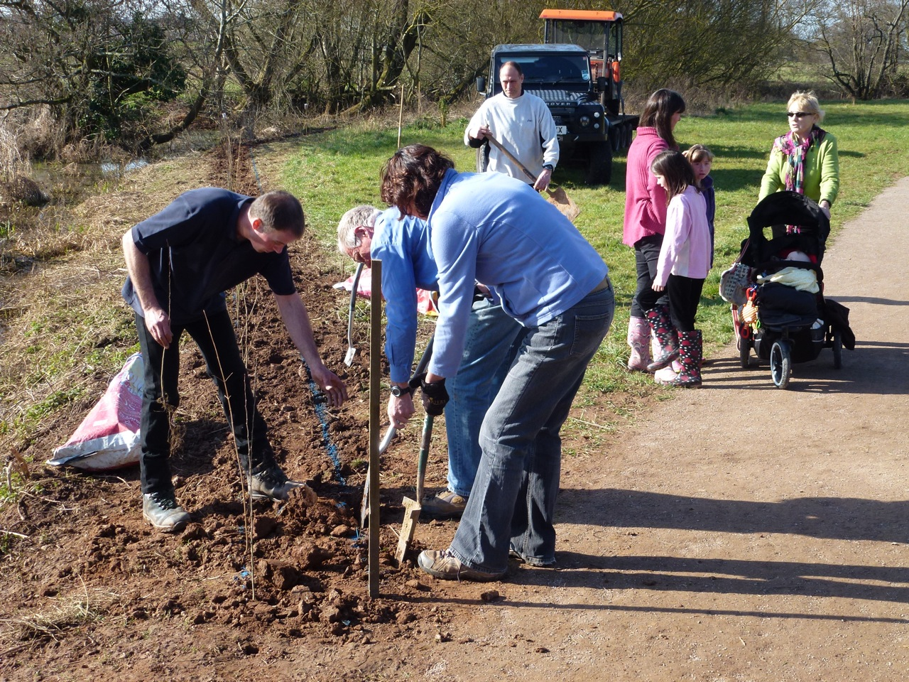 People planting small trees in bare ground to make a new hedge