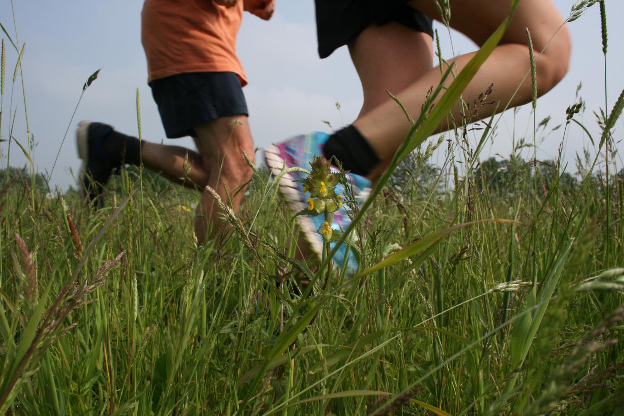 Runners' legs going past a yellow flower in long grass