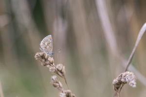 small brown butterfly resting on grass