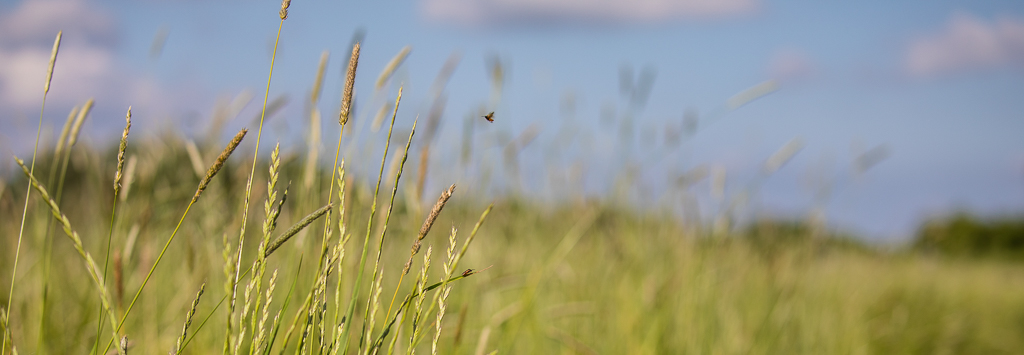 Beetle flying above long grass