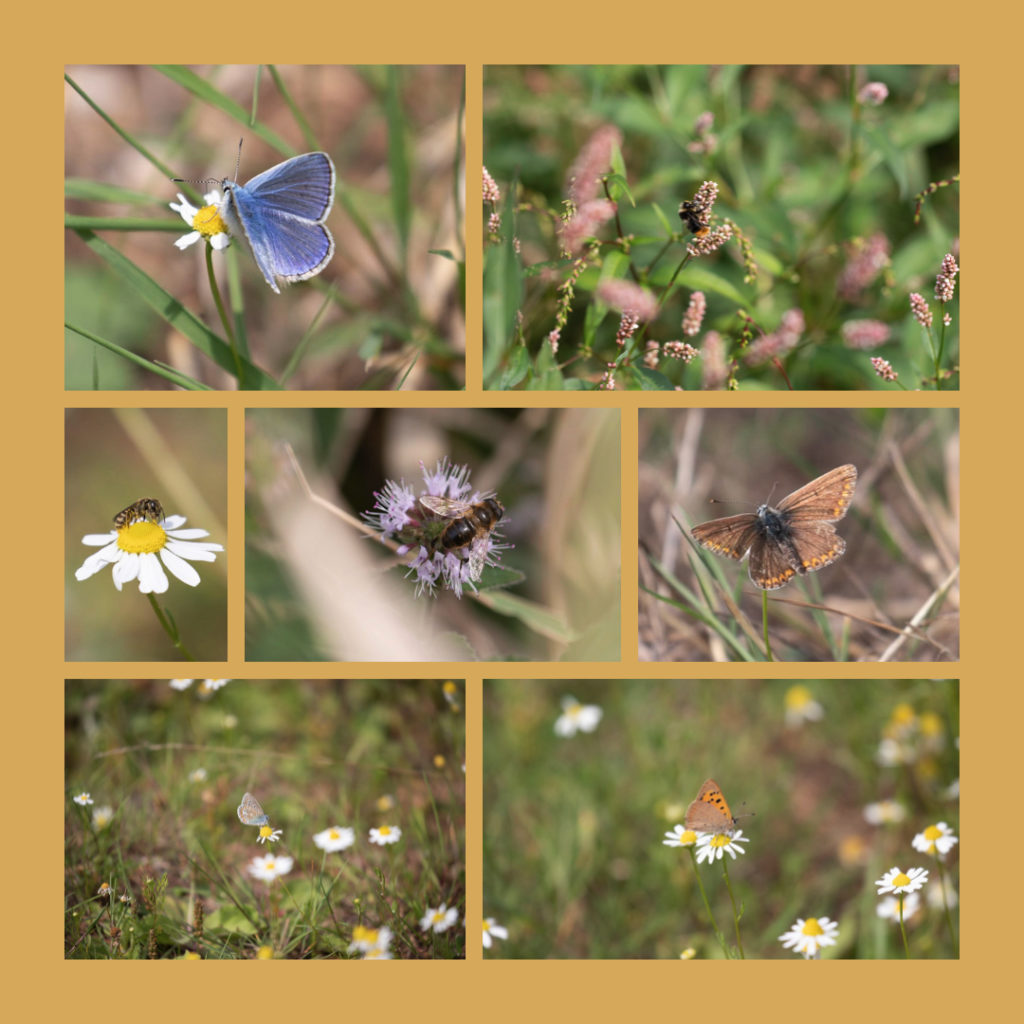 collage of various insects feeding on small flowering plants