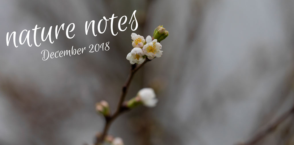 Nature Notes – December 2018