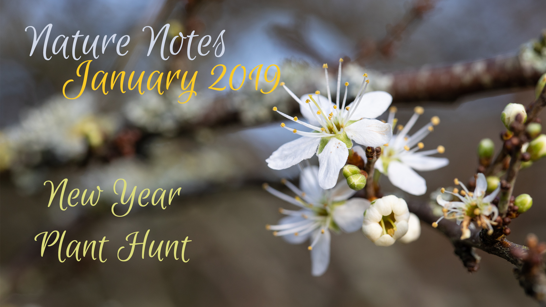 Nature Notes – January 2019 (New Year Plant Hunt!)