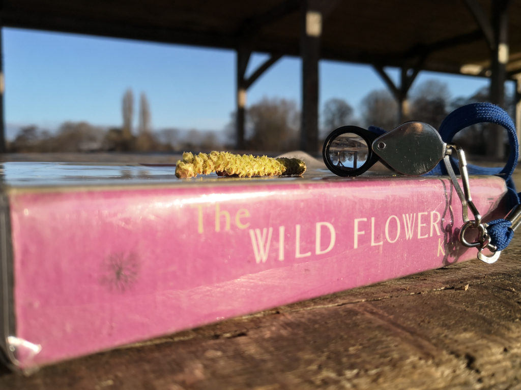 The Wildflower Key book with a hand lens and hazel catkin resting on it, blue skies and bare trees in the background.