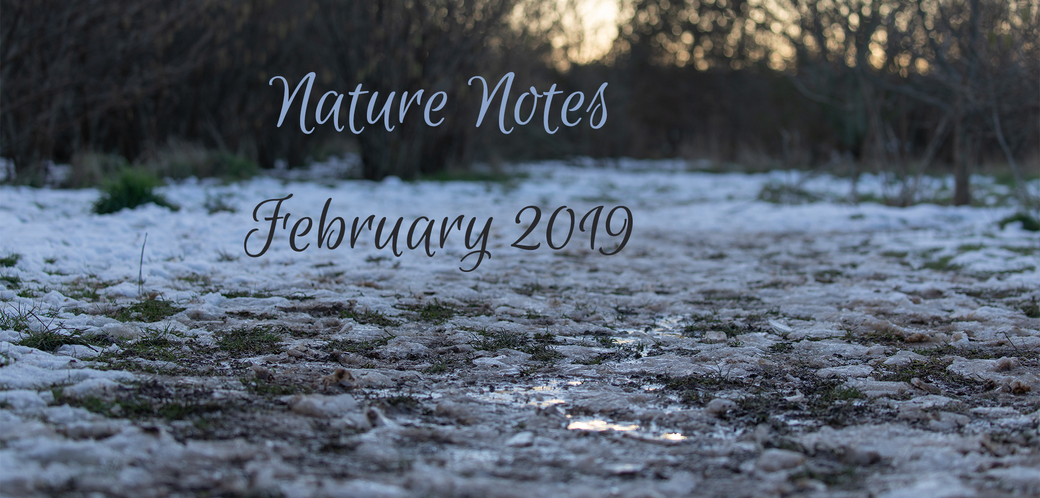Nature Notes – February 2019