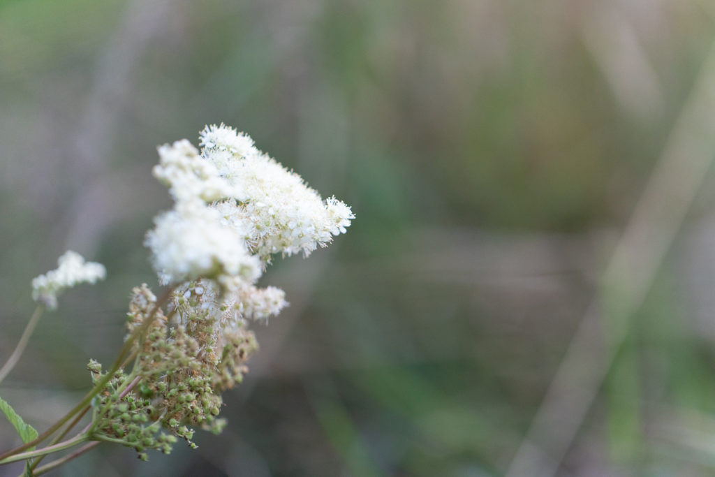 Frothy white flowers.